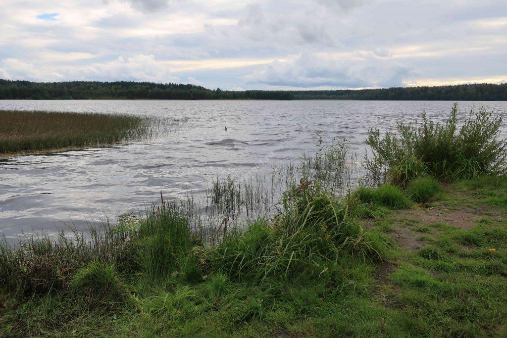 Великая (впадает в озеро Гладышевское)